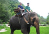 About Thailand - Activities - Elephant Riding